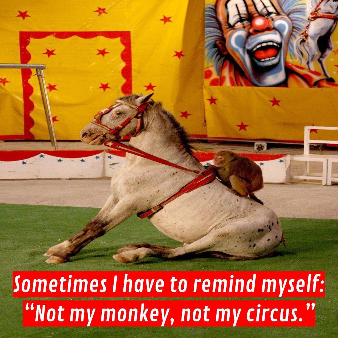 Circus monkey riding a horse